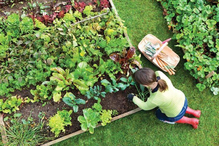backyard vege garden